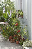 Terrasse mit Gemüse und Kräutern in Tontoepfen