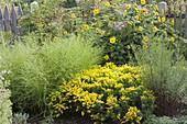 Gelber Spätsommer-Garten