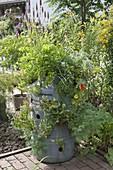 Plastikfass mit Löchern als Kräutergarten bepflanzt