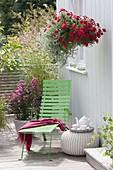 Korb-Ampel mit Petunia 'Deep Red' (Petunie) und Helichrysum 'Silver Star'