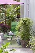 Zimmerpflanzen übersommern auf dem schattigen Balkon