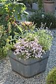 Holzkuebel mit Artischocke (Cynara scolymus), Diascia Breeze 'Pastel'