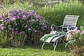 Liege am Herbstbeet mit Aster novae-angliae 'Barr's Pink' (Rauhblattaster)