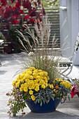 Blaue Emaille - Wanne herbstlich bepflanzt : Chrysanthemum 'Kiraz'
