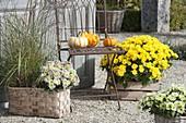 Kiesterrasse mit Chrysanthemum 'Splash Meadow' neu, 'Kiraz' gelb