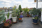Dachterrasse mit bepflanzten Kübeln auf fahrbaren Untersetzern