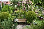 Mit Rosa (Kletterrosen) bepflanzte Laube, Chamacyparis (Scheinzypressen) als Kugel-Staemmchen, Pinus (Kiefer) kleine , mit Granit gepflasterte Terrasse, Bank