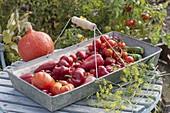 Frisch geerntete Paprika (Capsicum), Tomaten (Lycopersicon), Zucchini