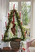 Hedera (Efeu) in Weihnachtsbaum-Form gezogen und mit roten Kerzen