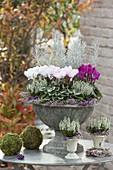 Graue Blumenspindel herbstlich bepflanzt : Cyclamen (Alpenveilchen), Calluna