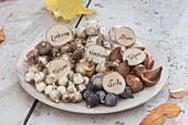 Schale mit Blumenzwiebeln für die Herbstpflanzung
