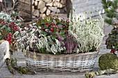 Laengliches Körbchen mit Calluna vulgaris Garden Girls (Knospenbluehende