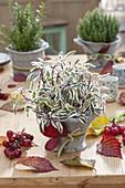 Herbstliche Tischdeko mit Kräutern