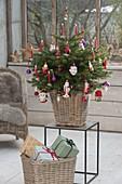 Kleine Nordmanntanne bunt geschmückt mit Kugeln und Weihnachtsmaennern