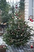 Nordmanntanne als Vogelfutter - Weihnachtsbaum auf Terrasse