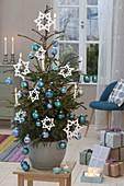 Lebende Picea abies (Rotfichte) geschmückt mit blauen Baumkugeln