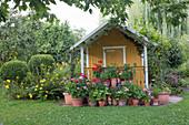 Gartenhaus mit vielen Geranientöpfen davor