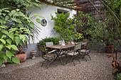 Kiesterrasse am Haus mit Tisch und Stühlen, Nerium (Oleander), Agapanthus (Schmucklilien), Punica granatum (Granatapfel) und Cordyline (Keulenlilie) in Toepfen