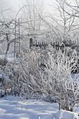 Dick mit Rauhreif überzogene Sträucher und Stauden im verschneiten Garten