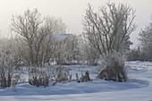 Blick durch den verschneiten Garten, Stauden, Gräser und Sträucher