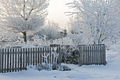Verschneiter Garten mit Holz-Zaun, Bäume und Sträucher dick mit Rauhreif