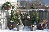 Verschneiter Balkon mit winterharten Gehoelzen