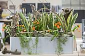 Pflanzen sorgen für gutes Raumklima im Büro