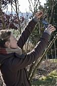 Frau schneidet Zweige von Prunus (Zierkirsche) zum antreiben für die Vase