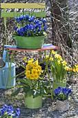 Blau-gelbes Fruehlingsarrangement mit Klappstuhl im Garten