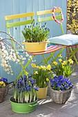 Blau-gelb bepflanzte Fruehlingsterrasse mit bunten Klappstuehlen