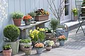 Frühlingsterrasse mit Kräutern und Frühjahrsblühern