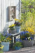 Frühlingsterrasse blau - gelb bepflanzt