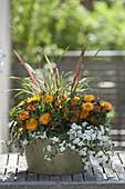 Schale sommerlich bepflanzt : Bracteantha 'Sunbrella Orange' (Strohblumen)