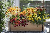 Balkonkasten in feurigen Farben bepflanzt