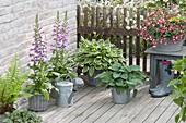 Terrasse mit Halbschattenpflanzen : Fuchsia 'Shadow Dancer Helena' (Fuchsie