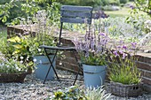 Kiesterrasse als Topfgarten : Salvia pratensis 'Rose Rhapsody'