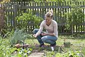 Rucola -Aussaat im Gemüsegarten