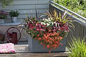 Grauer Kasten mit Argyranthemum 'Molimba Red' 'White Impression'