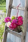 Holzkoerbchen mit duftenden Rosa (Rosen)an alte Holzleiter gebunden