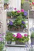 Pflanzentreppe aus Blech mit Kräutern und Balkonblumen