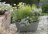 Alte Zinkwanne mit duftenden Pflanzen auf Kiesterrasse