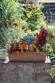 Terracottakasten mit Gemüse und Balkonblumen