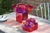 Zinnia (Zinnien) in roten, viereckigen Keramik-Vasen