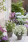 Duftende Terrasse mit Phlox paniculata (Flammenblumen