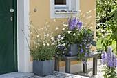 Hauseingang mit grauen Kästen blau und weiss bepflanzt