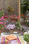Kleine Terrasse mit Teppich und Kissen : Pelargonium