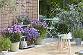 Blau - violette Terrasse mit Phlox (Flammenblumen), Buddleja