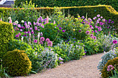 Arundel Castle GARDENS, West Sussex: BORDER with ALLIUM AND YEW HEDGING