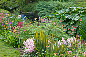 Marwood HILL, Devon: WATERFALL IN THE BOG Garden with CANDELABRA Primula AND ASTILBE