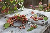 Kränzchen aus Malus 'Van Eseltine' (Zieraepfeln) auf Apfelzweigen binden